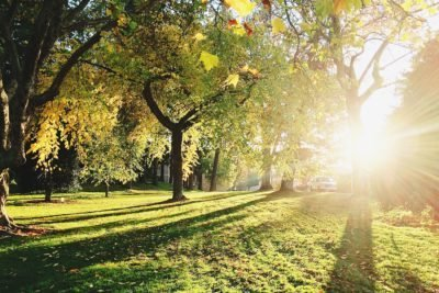 landscaper-planting-trees-400x267